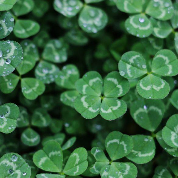 10 choses que vous ne saviez pas sur la Saint-Patrick